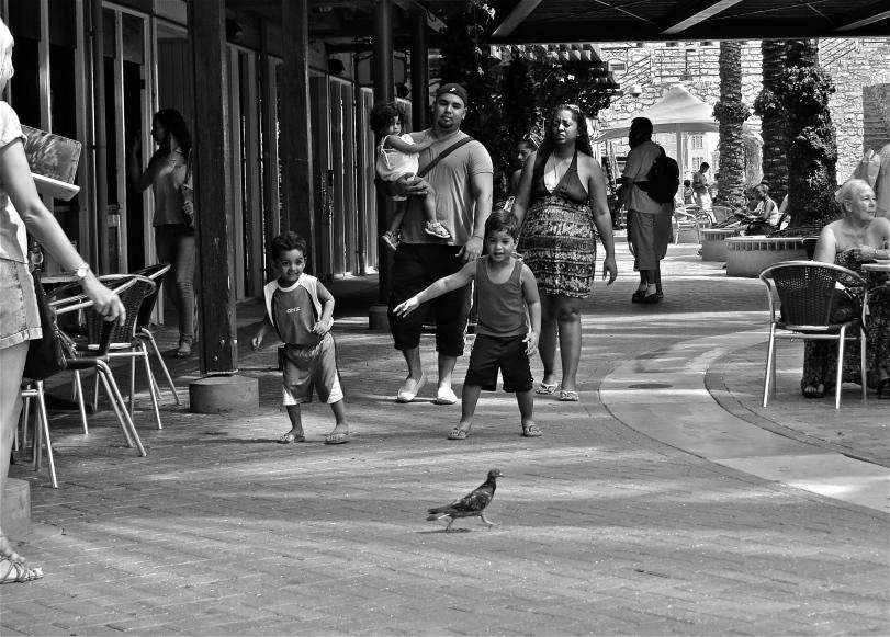 'Watch the Birdie'